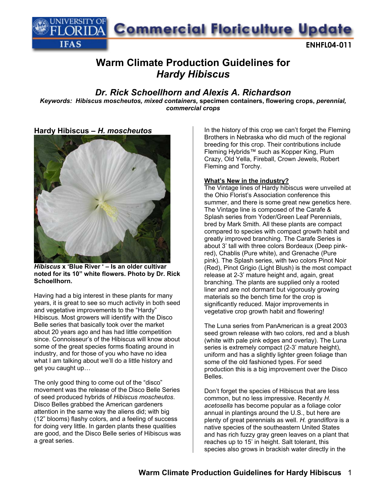 Warm Climate Production Guidelines For Hardy Hibiscus