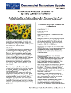 Warm Climate Production Guidelines for Specialty Cut Flowers: Sunflower