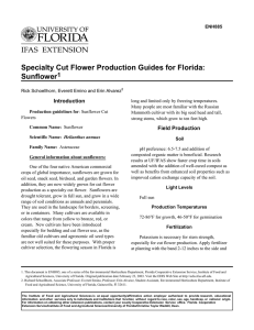 Specialty Cut Flower Production Guides for Florida: Sunflower 1 Introduction