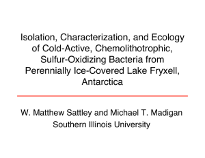 Isolation, Characterization, and Ecology of Cold-Active, Chemolithotrophic, Sulfur-Oxidizing Bacteria from