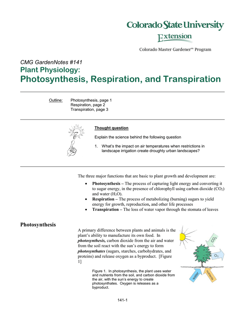 Photosynthesis, Respiration, and Transpiration Plant