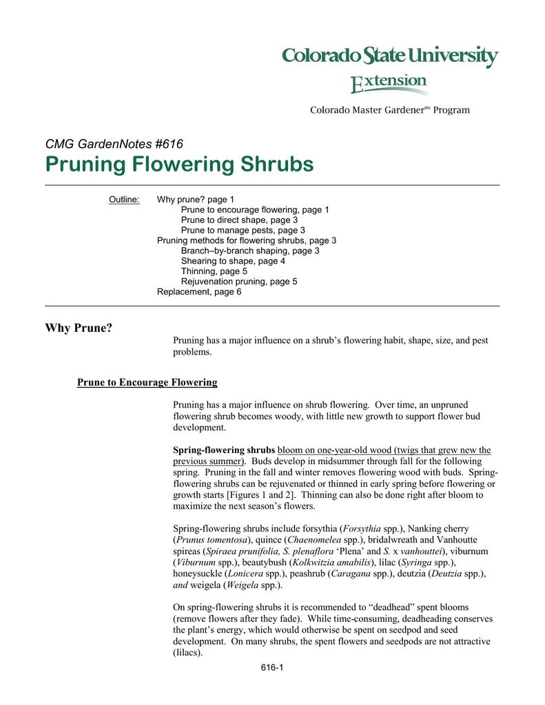 Pruning Flowering Shrubs Cmg Gardennotes 616