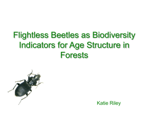 Flightless Beetles as Biodiversity Indicators for Age Structure in Forests Katie Riley