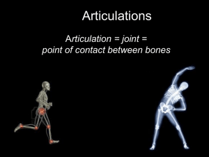 Articulations rticulation = joint = point of contact between bones