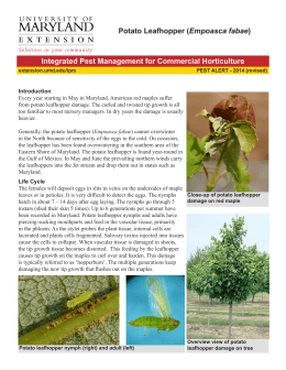 Empoasca fabae Integrated Pest Management for Commercial Horticulture