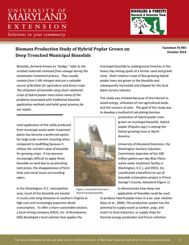 Biomass Production Study of Hybrid Poplar Grown on