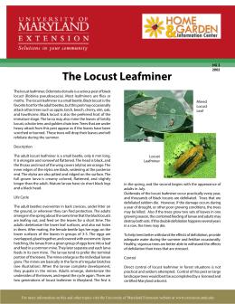The Locust Leafminer