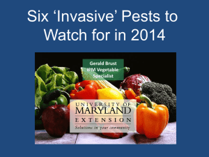 Six 'Invasive' Pests to Watch for in 2014 Gerald Brust IPM Vegetable