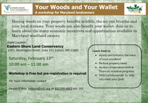 Your Woods and Your Wallet