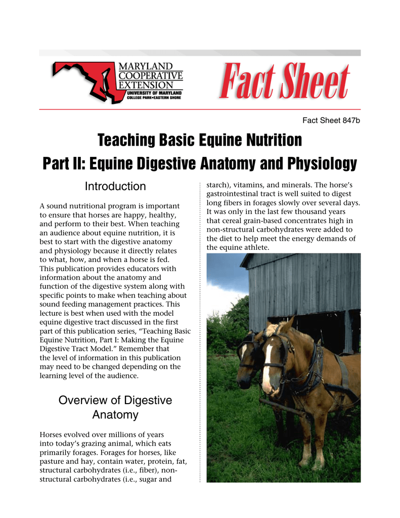 Teaching Basic Equine Nutrition Part II: Equine Digestive Anatomy ...