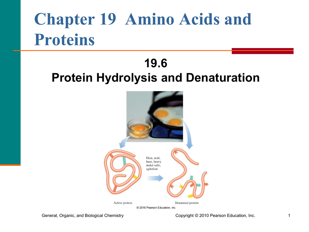 protein hydrolysis and denaturation