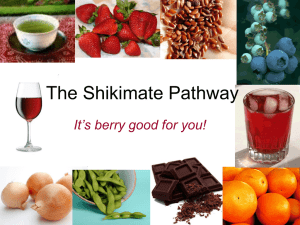 The Shikimate Pathway It's berry good for you!