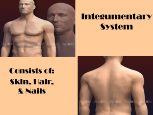 Integumentary System Consists of: Skin, Hair,