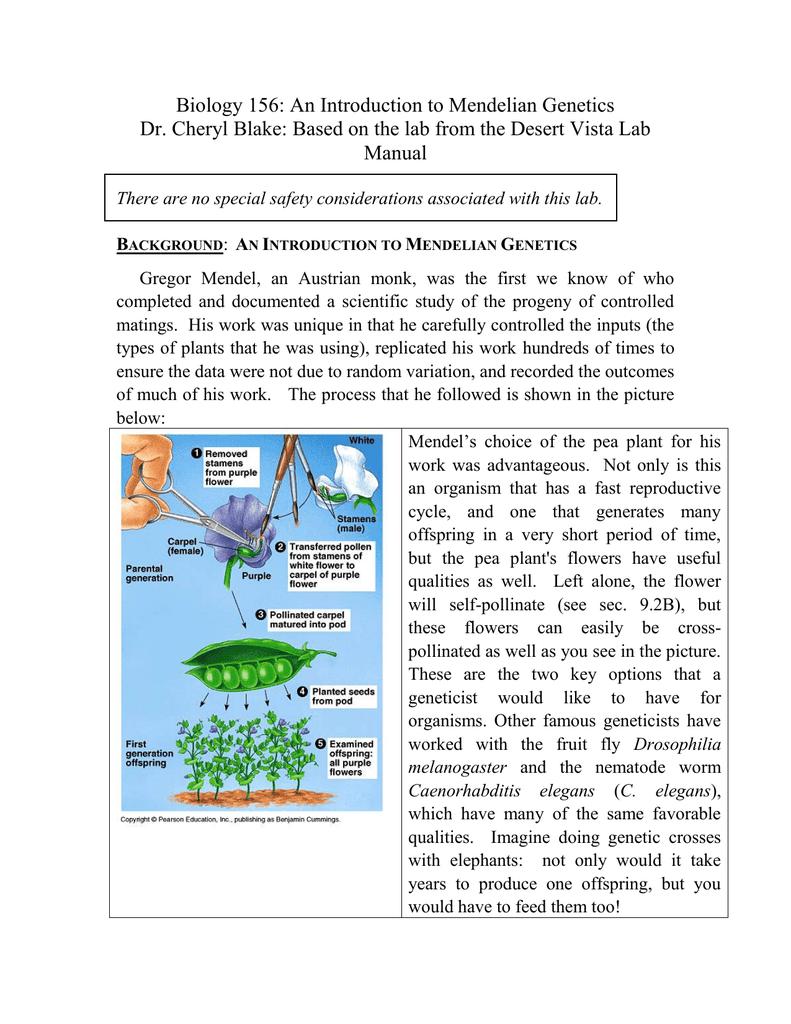 c elegans genetic crosses lab report