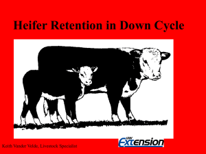 Heifer Retention ( 7 slides, 157 KB .ppt)