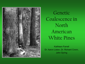 Genetic Coalescence in North American