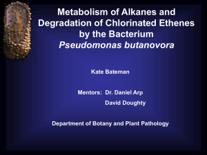 Metabolism of Alkanes and Degradation of Chlorinated Ethenes by the Bacterium Pseudomonas butanovora