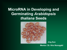 MicroRNA in Developing and Arabidopsis thaliana Jing Sun