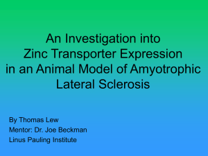 An Investigation into Zinc Transporter Expression in an Animal Model of Amyotrophic