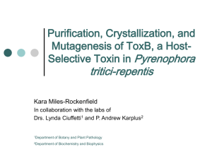 Pyrenophora tritici-repentis Purification, Crystallization, and Mutagenesis of ToxB, a Host-