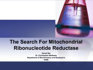 The Search For Mitochondrial Ribonucleotide Reductase Daniel Bai Dr. Christopher Mathews