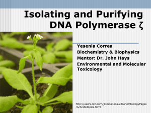 Isolating and Purifying DNA Polymerase ζ