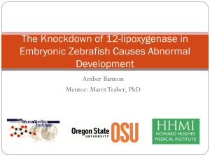 The Knockdown of 12-lipoxygenase in Embryonic Zebrafish Causes Abnormal Development Amber Bannon