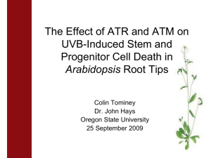 The Effect of ATR and ATM on UVB-Induced Stem and Arabidopsis