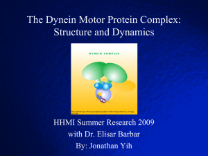 The Dynein Motor Protein Complex: Structure and Dynamics HHMI Summer Research 2009