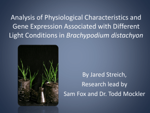 Analysis of Physiological Characteristics and Gene Expression Associated with Different Brachypodium distachyon