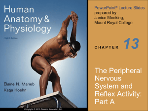 13 The Peripheral Nervous System and