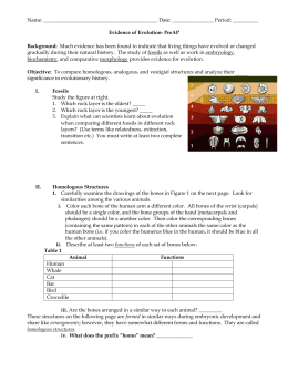 Printables Evidence For Evolution Worksheet evidence of evolution packet evolution