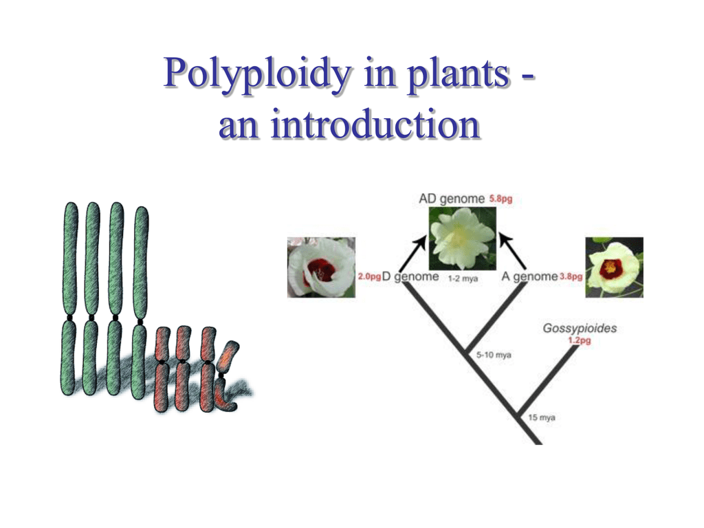 Polyploidy: Biological Relevance