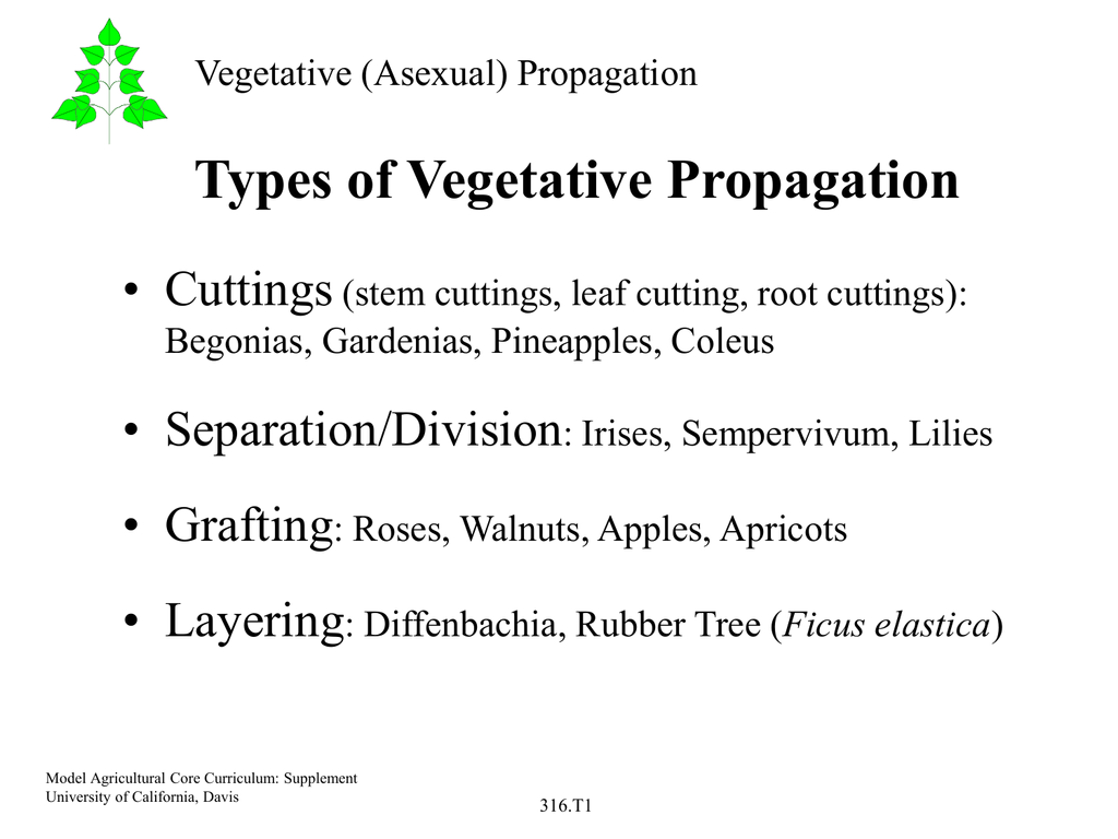 Asexual propagation methods plants