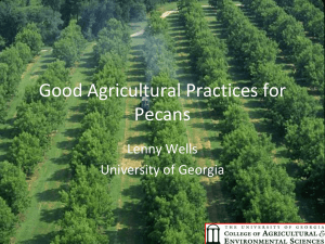 Good Agricultural Practices for Pecans