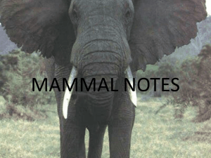 mammal notes powerpoint