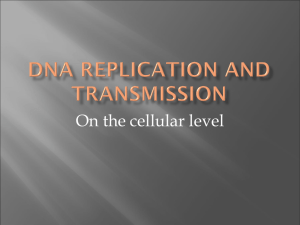 DNA Replication and Transmission