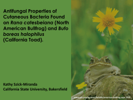 Antifungal Properties of Cutaneous Bacteria Found Rana catesbeiana Bufo