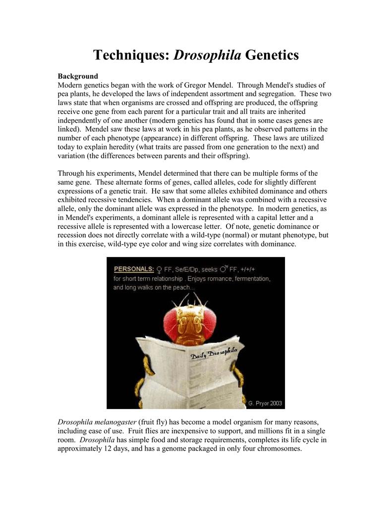 fruit fly dihybrid cross exercise doc