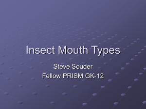 Insect Mouth Parts Powerpoint
