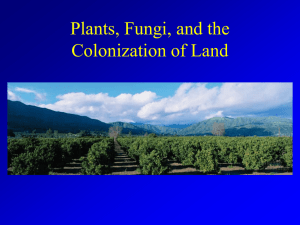 Plants, Fungi the Colonization of Land