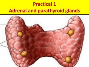 Practical pathology of Adrenal, PTH