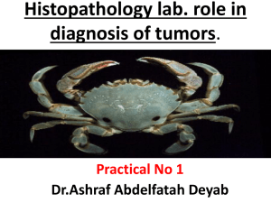 Practical surgical pathology and neoplasia 2