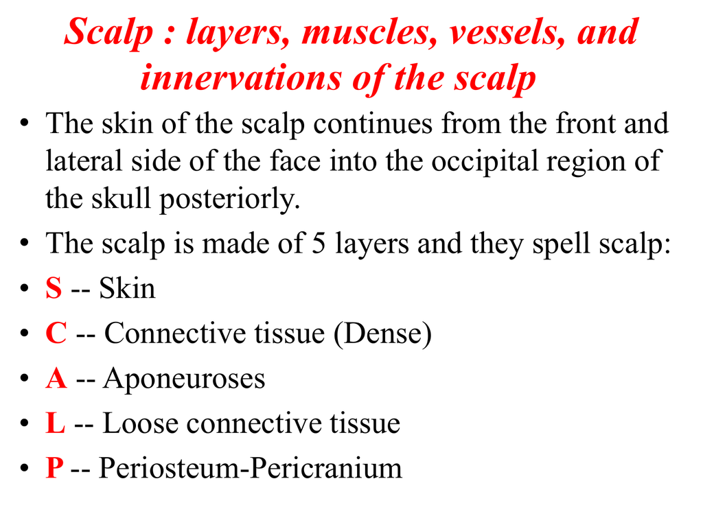 SCALP & FACE ANATOMY LECTURE-1- FOR 1ST YEAR