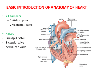 CARDIOVASCULAR SYSTEM PHYSIOLOGY LECTURE FOR 1ST YEAR