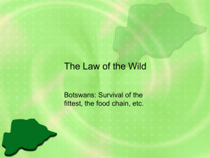 The Law of the Wild Botswans: Survival of the