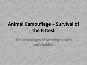 Animal Camouflage – Survival of the Fittest one's habitat.