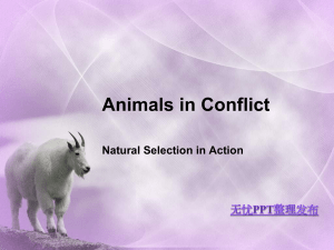 Animals in Conflict Natural Selection in Action