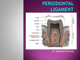 3rd year periodontal ligament