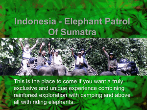 Indonesia - Elephant Patrol of Sumatra